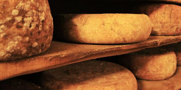 16-formaggi-900x300