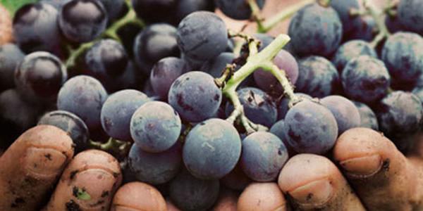 viticoltura-e-biodiversita