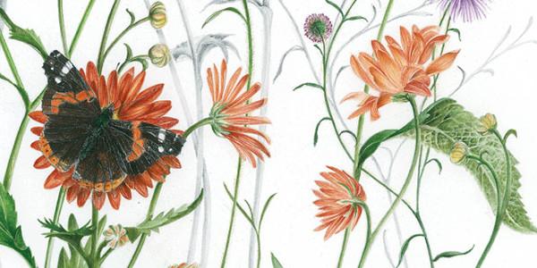 biodiversità-botanica