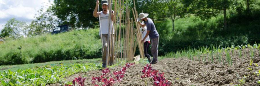 paesaggio-agricoltura