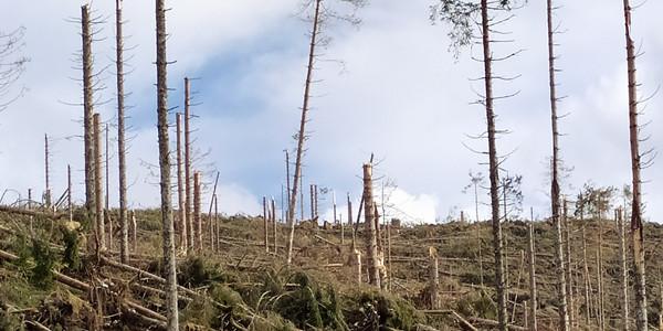 Tempesta-Vaia-Marcesina-Val-Maron-Sette-Comuni